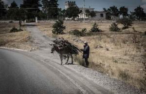 albania-paesaggio-asino-trasporto