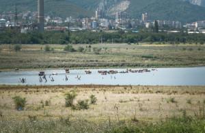 bulgaria-paesaggio-vacche-a-mollo
