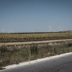 macedonia-paesaggio-girasoli