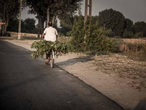 valacchia-bicicletta-frasche