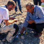 popolo curdo scambio tabacco