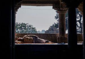 cultura indiana chittorgarh tempio