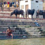 cultura indiana varanasi gange uomini bufali