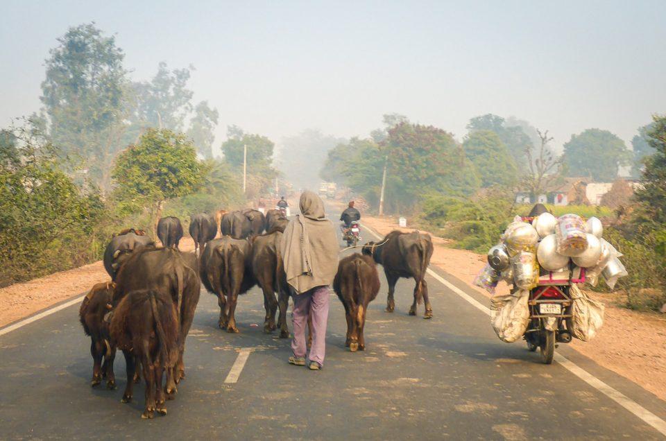 India in moto. Un clacson per la vita